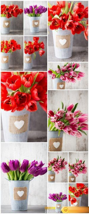 Bouquet of tulips on a gray background 13X JPEG