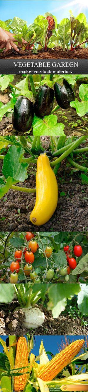 Vegetable garden – 6UHQ JPEG