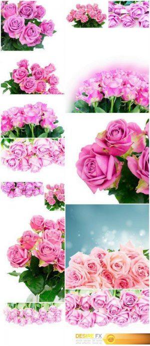 Violet roses 14X JPEG