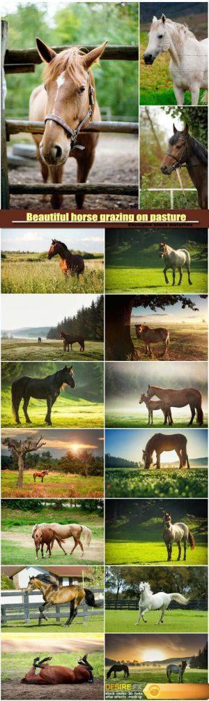 Beautiful horse grazing on pasture