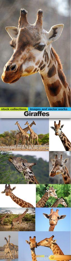 Giraffes, 10 x UHQ JPEG