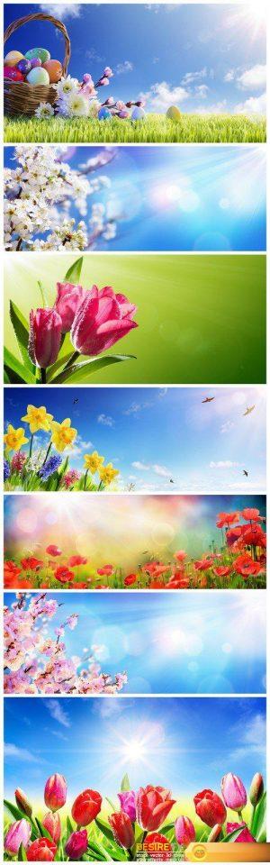 Spring flowers and sun rays 7X JPEG