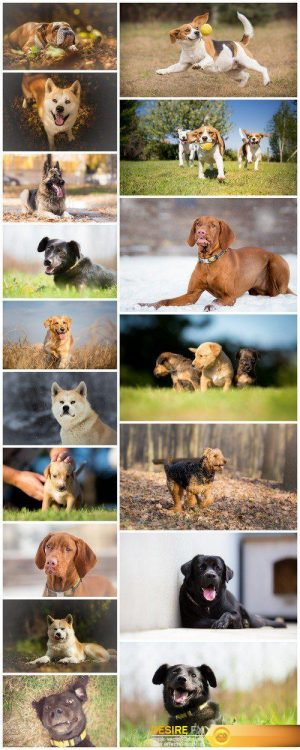 Background photo of a dog chasing a ball #2 17X JPEG