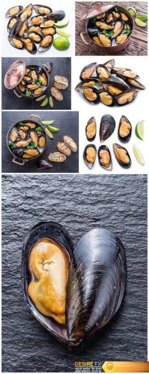 Mussels on the background of graphite 7X JPEG