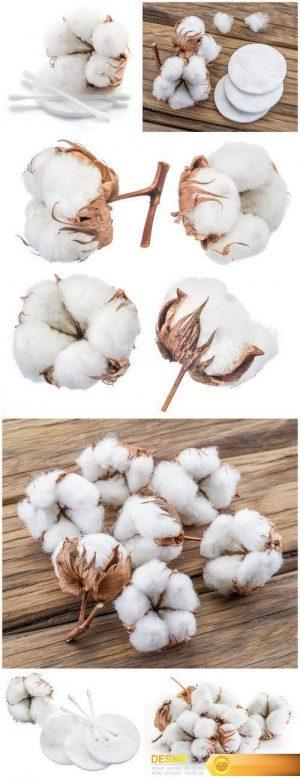 Cotton 6X JPEG