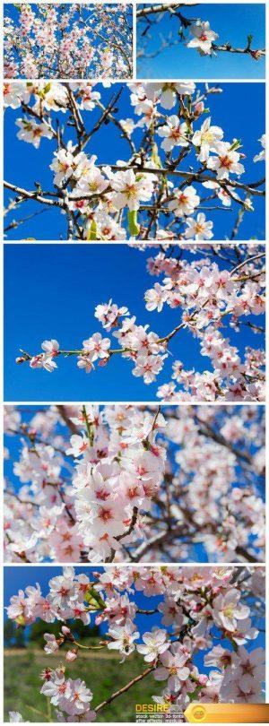 Beautiful flower background 6X JPEG