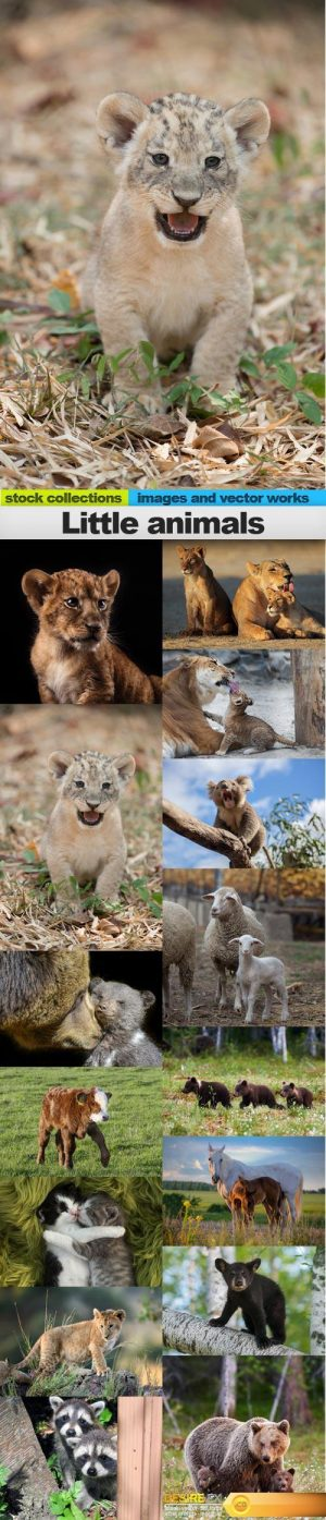 Little animals, 15 x UHQ JPEG