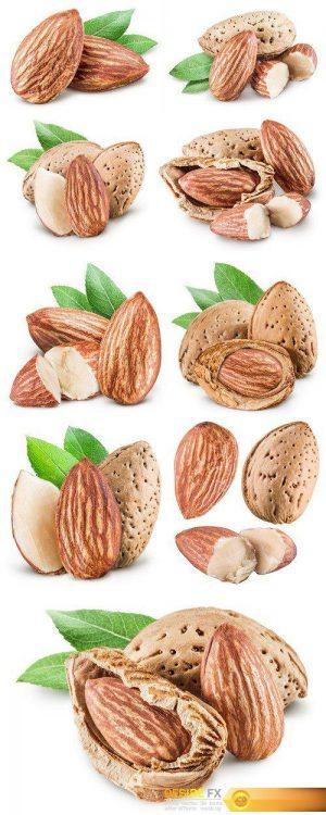 Almond nuts 9X JPEG