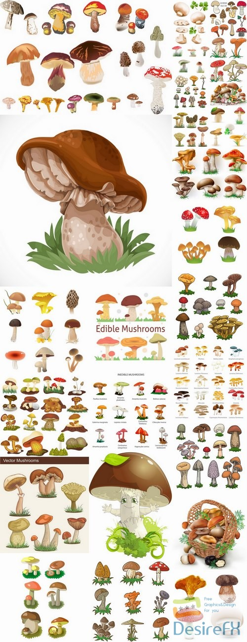 stock-vectors - Mushrooms and fungi of different species breed class poisonous edible 25 EPS