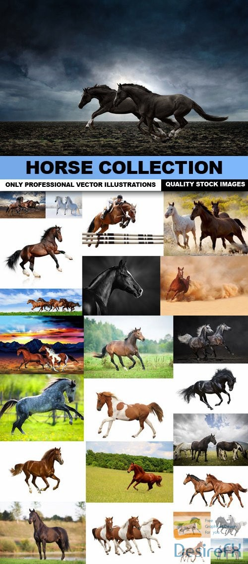 stock-images - Horse Collection - 25 HQ Images