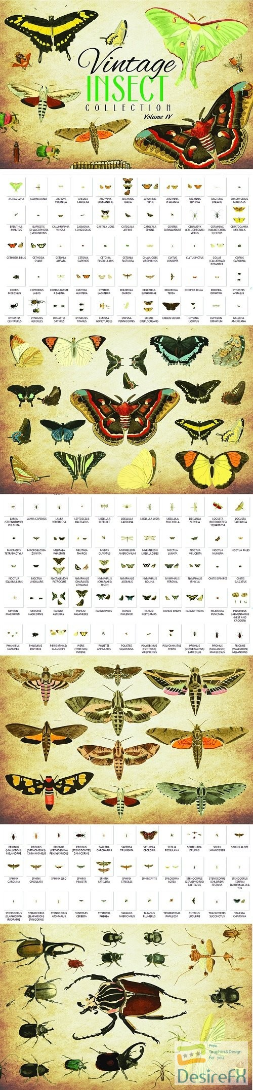 stock-vectors - 154 Vintage Insect Vector Graphics 4 - 3502662