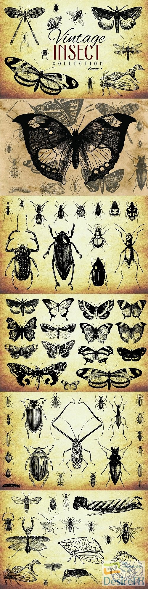 stock-vectors - 200 Vintage Insect Vector Graphics - 3450238