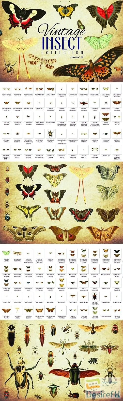 stock-vectors - 110 Vintage Insect Vector Graphics 2 - 3481948