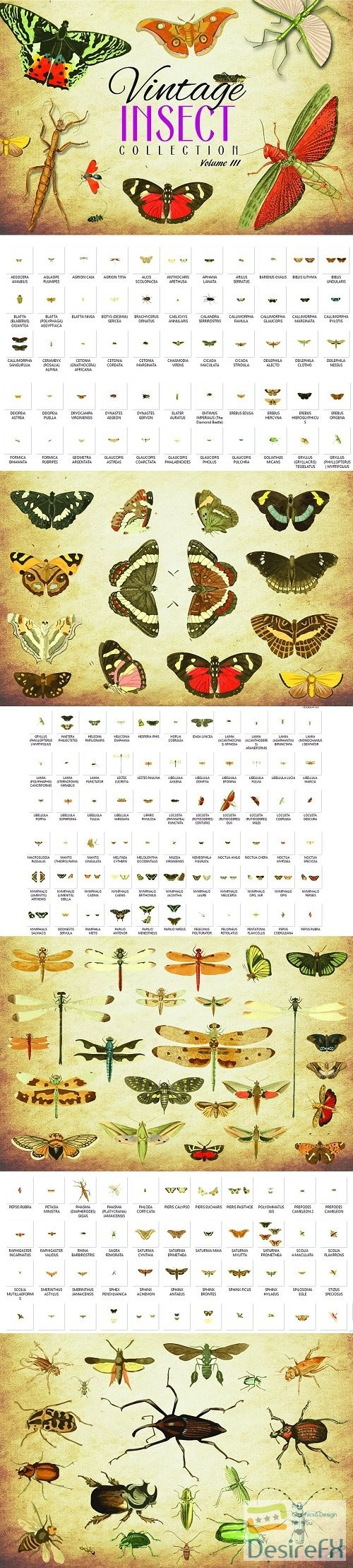 stock-vectors - 172 Vintage Insect Vector Graphics 3 - 3493784