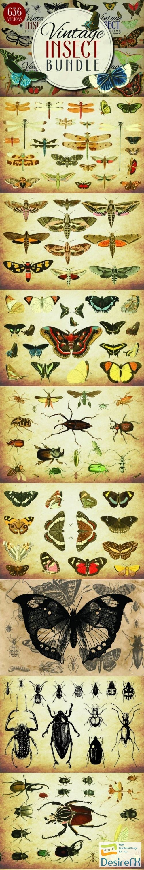 stock-vectors - Insect Vector Graphics Bundle