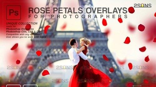 Falling Rose Petals Photo Overlays, Rose Petals, Red Rose - 1133526