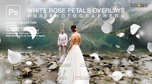 Falling Rose Petals Photo Overlays, White petals png - 1133527