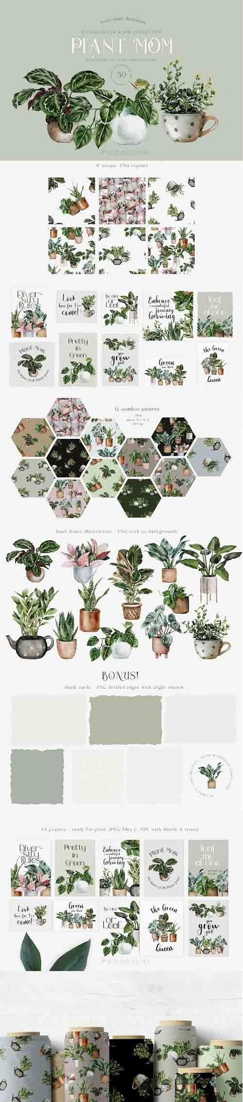 House Plants Illustrations and Patterns Big Collection - 1311192