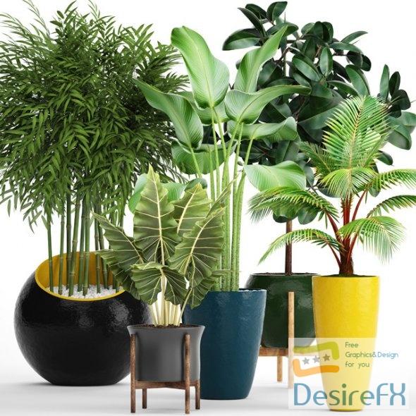 Big set plants