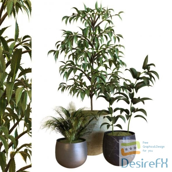 Plant In Box Set 040